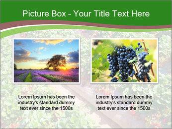 Strawberry field PowerPoint Templates - Slide 18