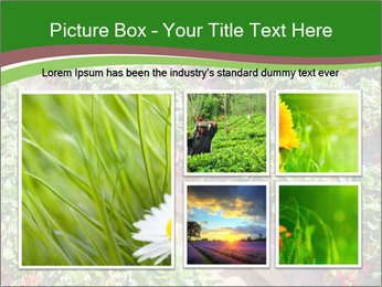 Strawberry field PowerPoint Template - Slide 19