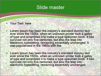 Strawberry field PowerPoint Template - Slide 2