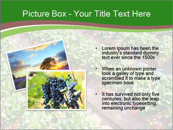 Strawberry field PowerPoint Template - Slide 20