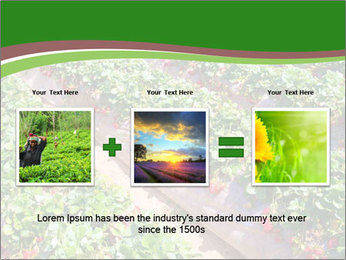 Strawberry field PowerPoint Template - Slide 22