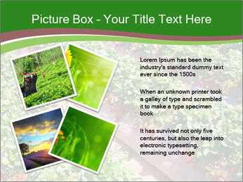 Strawberry field PowerPoint Template - Slide 23