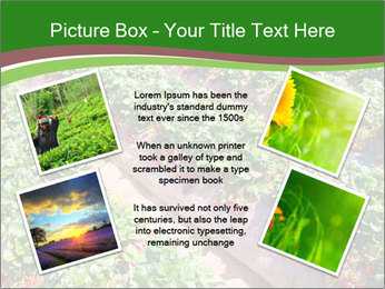 Strawberry field PowerPoint Template - Slide 24