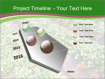 Strawberry field PowerPoint Template - Slide 26