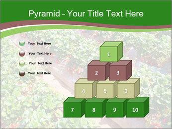 Strawberry field PowerPoint Templates - Slide 31