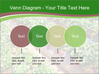 Strawberry field PowerPoint Template - Slide 32