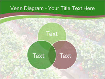 Strawberry field PowerPoint Template - Slide 33