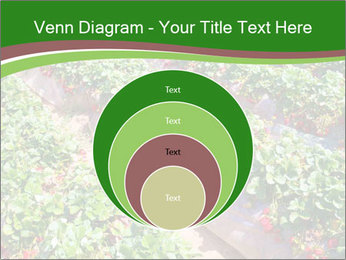 Strawberry field PowerPoint Template - Slide 34
