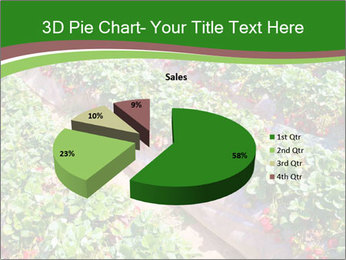 Strawberry field PowerPoint Template - Slide 35