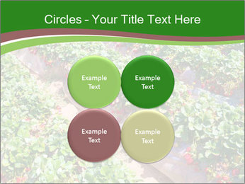 Strawberry field PowerPoint Template - Slide 38