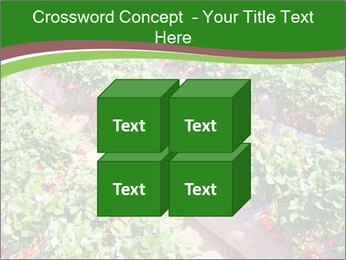 Strawberry field PowerPoint Template - Slide 39