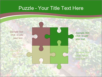 Strawberry field PowerPoint Template - Slide 43