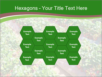 Strawberry field PowerPoint Template - Slide 44