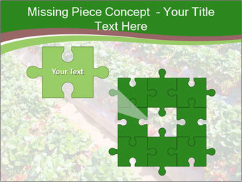 Strawberry field PowerPoint Template - Slide 45