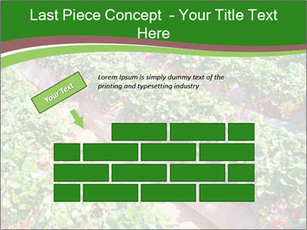 Strawberry field PowerPoint Template - Slide 46