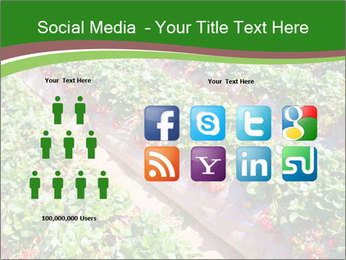 Strawberry field PowerPoint Template - Slide 5
