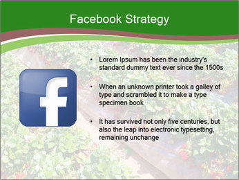 Strawberry field PowerPoint Template - Slide 6