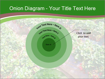 Strawberry field PowerPoint Template - Slide 61