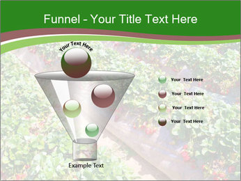 Strawberry field PowerPoint Template - Slide 63
