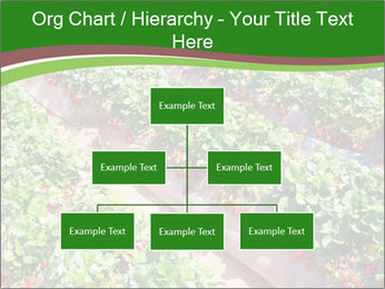 Strawberry field PowerPoint Template - Slide 66