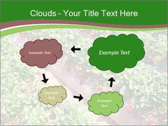 Strawberry field PowerPoint Templates - Slide 72