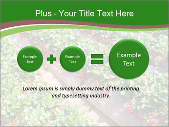 Strawberry field PowerPoint Template - Slide 75