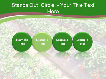 Strawberry field PowerPoint Template - Slide 76