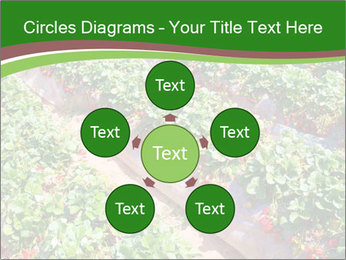 Strawberry field PowerPoint Template - Slide 78