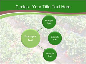 Strawberry field PowerPoint Template - Slide 79