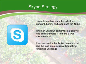 Strawberry field PowerPoint Template - Slide 8