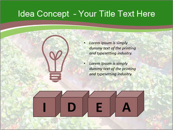 Strawberry field PowerPoint Template - Slide 80