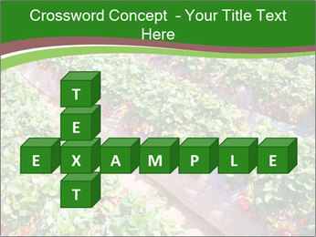 Strawberry field PowerPoint Template - Slide 82