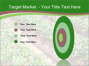Strawberry field PowerPoint Template - Slide 84