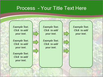 Strawberry field PowerPoint Template - Slide 86