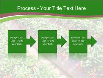 Strawberry field PowerPoint Templates - Slide 88