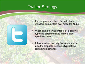 Strawberry field PowerPoint Template - Slide 9