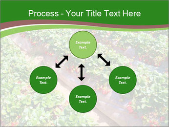 Strawberry field PowerPoint Template - Slide 91