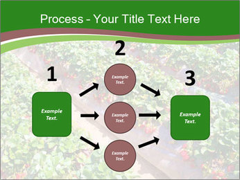 Strawberry field PowerPoint Template - Slide 92