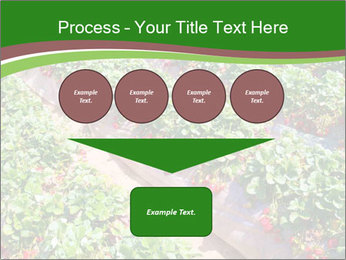 Strawberry field PowerPoint Template - Slide 93