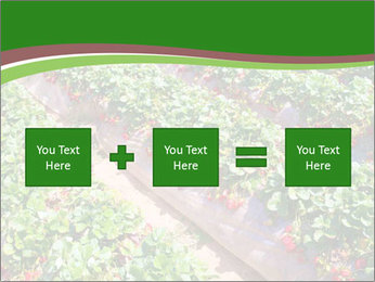 Strawberry field PowerPoint Template - Slide 95