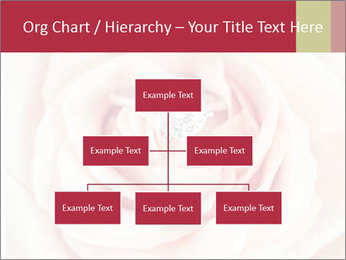 Wedding pink rose PowerPoint Templates - Slide 66