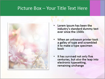 Flowers with color filters PowerPoint Templates - Slide 13