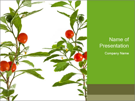 Home plant PowerPoint Template