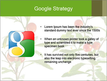 Home plant PowerPoint Templates - Slide 10