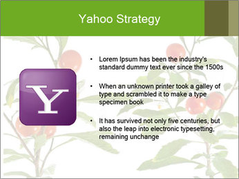 Home plant PowerPoint Templates - Slide 11