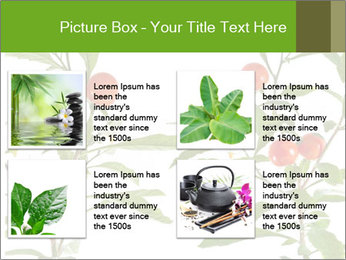 Home plant PowerPoint Templates - Slide 14