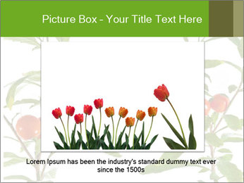 Home plant PowerPoint Templates - Slide 15