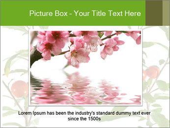 Home plant PowerPoint Templates - Slide 16