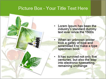 Home plant PowerPoint Templates - Slide 17