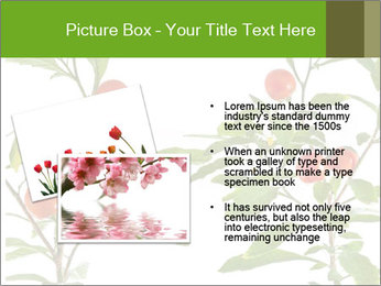 Home plant PowerPoint Templates - Slide 20